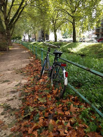 Autumn coming Tree Bicycle Nature Outdoors Day Growth Leaf Branch Beauty In Nature Sky Stream Stream - Flowing Water Green Green Alley Autumn Leaves Autumn Colours Fall Fall Beauty Fall Colors Fall Season