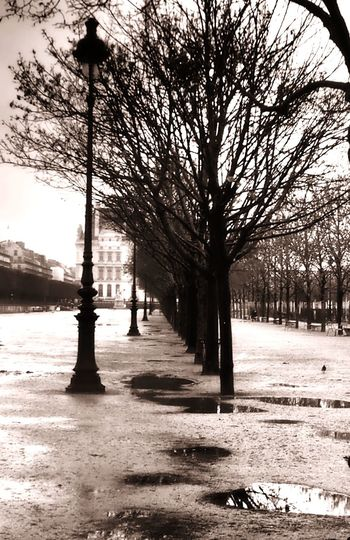 Blackandwhite Black And White Photography Tree Homage To Doisneau Tuilleries, Paris Wintertime Paris ❤