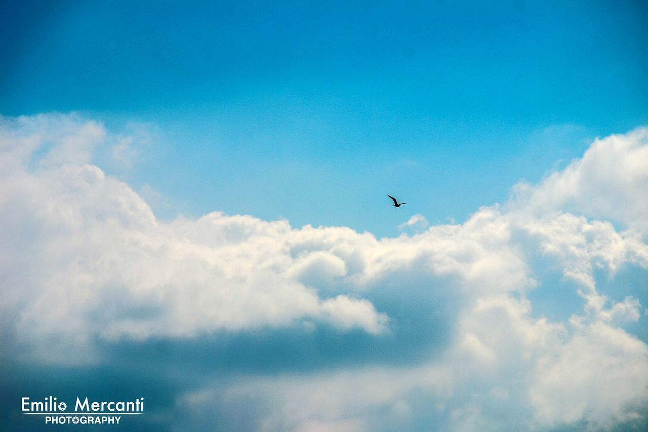 bird, sky, flying, cloud - sky, animals in the wild, nature, low angle view, animal themes, one animal, outdoors, day, beauty in nature, no people, blue, spread wings