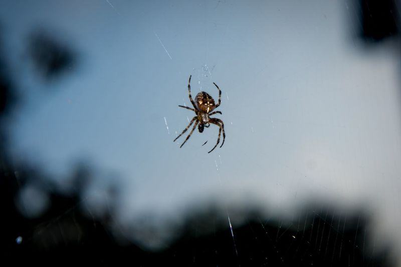 Spider Spider Web One Animal Insect Animal Themes Web Close-up Day No People Nature