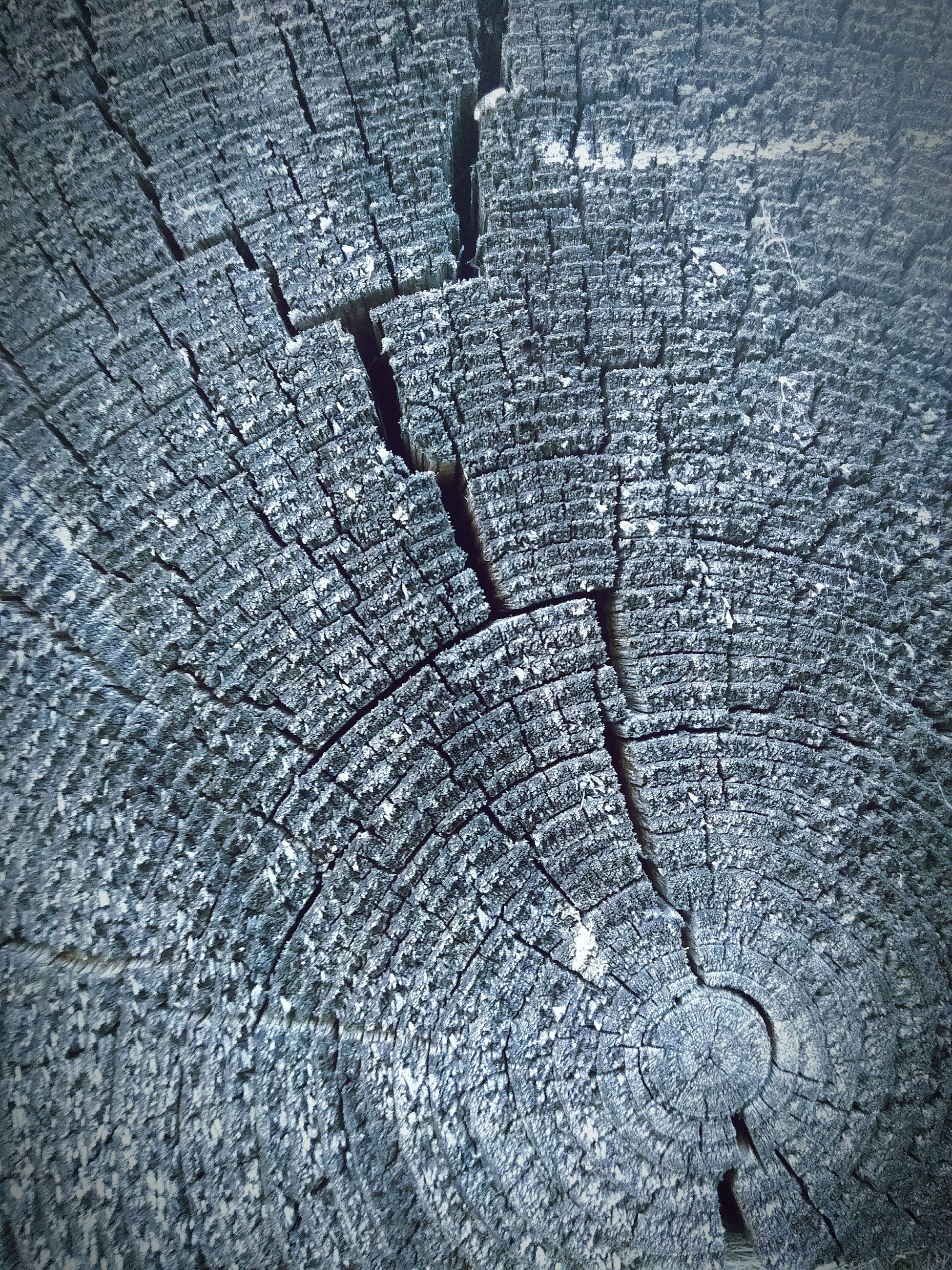textured, wood - material, cracked, tree ring, close-up, tree stump, backgrounds, pattern, outdoors, full frame, no people, day, nature, concentric