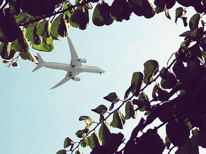 Fly istanbul✈️ Istanbul Fly Ucak IPhone SE 📱🇹🇷