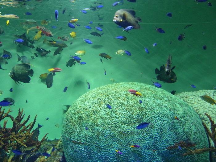 カリブ海 Fish