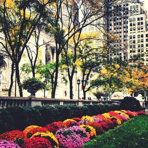 İ Love NY