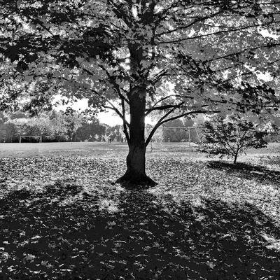 Autumn Blackandwhite AMPt_community Monochrome Autumn