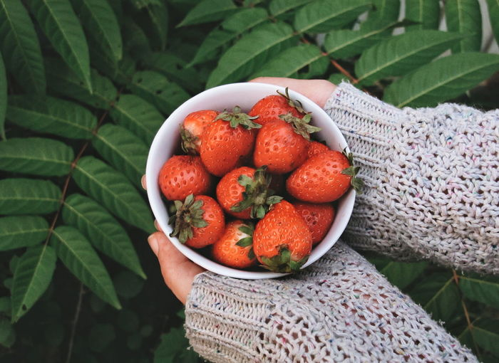 Human Hand Fruit Leaf Healthy Lifestyle Red High Angle View Close-up Plant Food And Drink Strawberry Berry