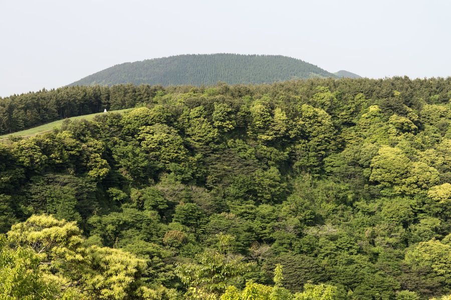 view of Sangumburi, a dormant volcano crater in Jeju Island, South Korea Beauty In Nature Clear Sky Crater Day Dormant Volcano Forest Green Color Growth JEJU ISLAND  Landscape Lush Foliage Mountain Nature No People Outdoors Plant Sangumburi Scenics Sky Tea Crop Tree