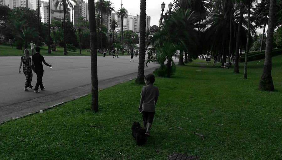 Park Nature My Son My Live Dog