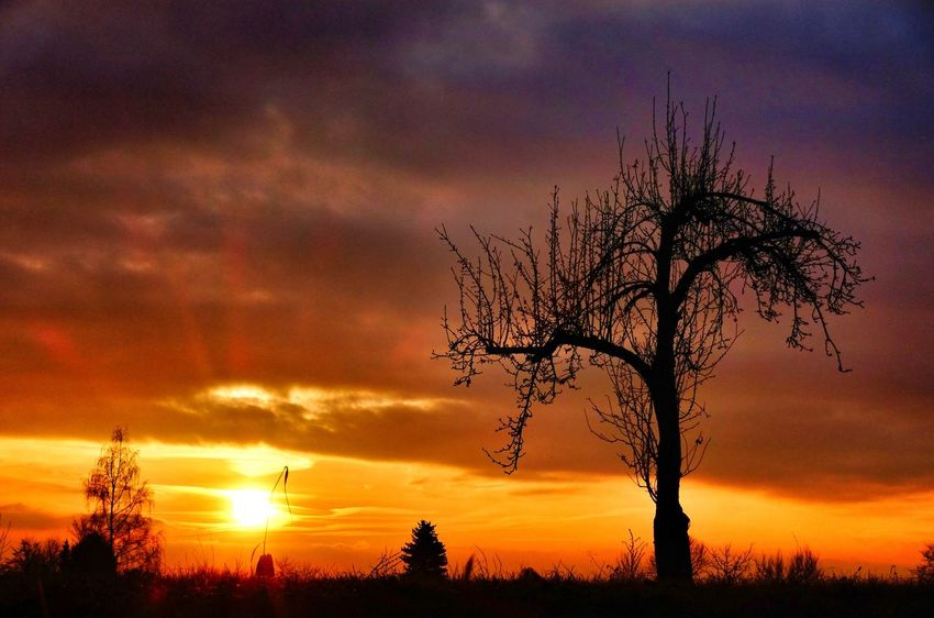 Sunset Tree Sky Nature Beauty In Nature Silhouette No People Dramatic Sky Scenics Romantic Sky Tranquility Cloud - Sky Tranquil Scene Outdoors Dramatic Sky Tree_collection  Nature Lover Tree_collection  Nature Silhouette Taking Photo Beauty In Nature Eyem Best Shots Nature_collection Tree_collection  Nature Eyeem0711