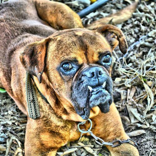 Dog Dogoftheday