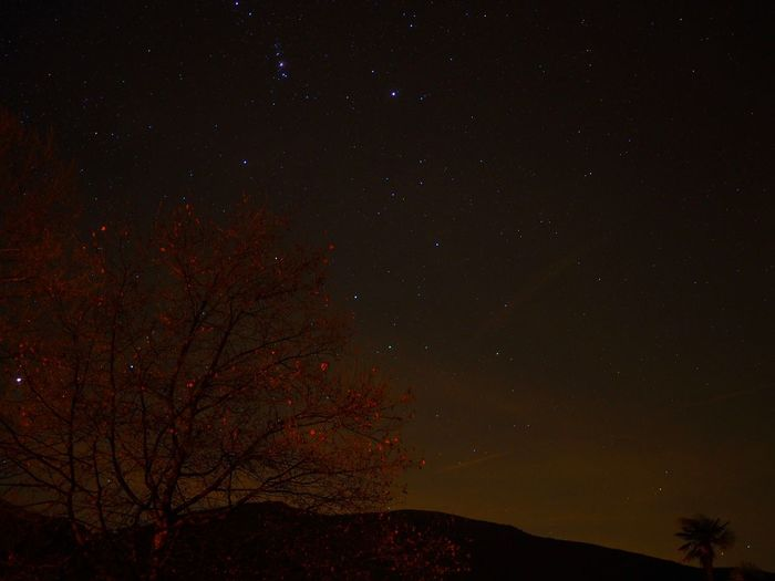 Astronomy Beauty In Nature Constellation Galaxy Low Angle View Nature Night No People Outdoors Scenics Sky Space Space And Astronomy Star - Space Star Field Tranquility Tree