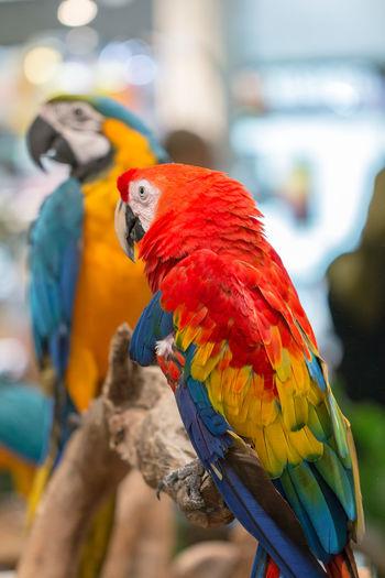 Bird Parrots
