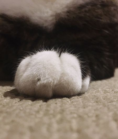 Paws Cat's Paw Cute Pets Glove on paws😽 Puffy White Cotton EyeEm Animal Lover From My Point Of View Cats Of EyeEm EyeEm Best Shots Cat Lovers EyeEm Gallery EyeEm