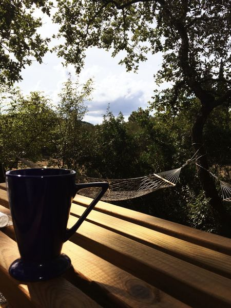 Tree No People Day Growth Table Nature Sky Outdoors Beauty In Nature Freshness Close-up Coffee Mazagan