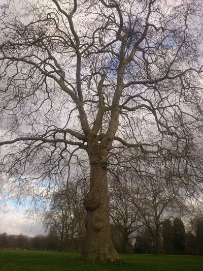 Bare Tree Beauty In Nature Branch Day Field Grass Growth Land Low Angle View Nature No People Outdoors Park Plant Scenics - Nature Sky Tranquility Tree Tree Trunk Trunk
