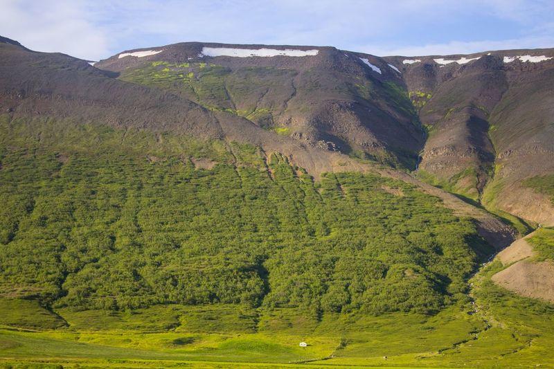 Grass Iceland