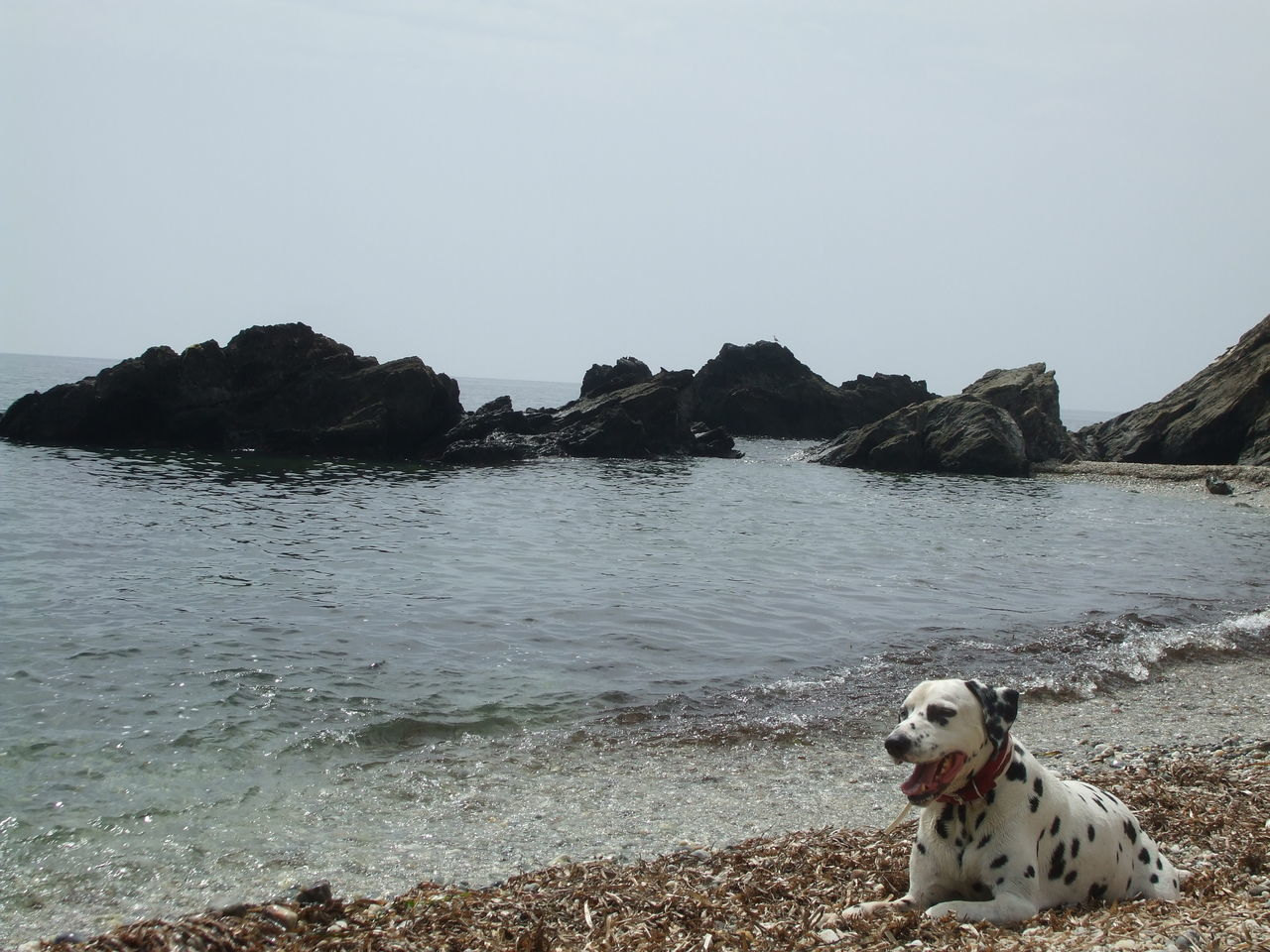 dog, pets, domestic animals, one animal, animal themes, nature, sea, outdoors, mammal, day, water, no people, tranquility, beauty in nature, sky