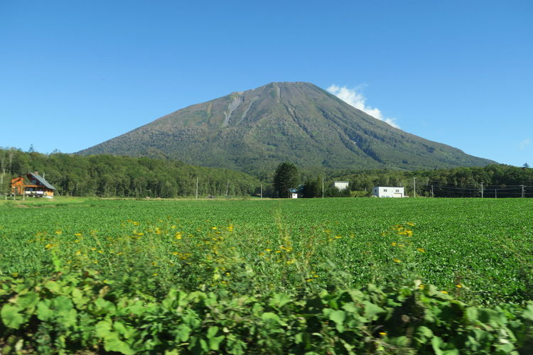 autumn niseko hokkaido japan 2018 In One Photograph It's About The Journey Moments Of Happiness Capture Tomorrow Nature Tree Autumn Day Outdoors Grass Mountain Hokkaido Agriculture Niseko Yotei EyeEmNewHere Yotei Mt., Hokkaido Yotei Mt. Sky Landscape Land Beauty In Nature Plant Field Tranquil Scene Scenics - Nature Environment Growth Clear Sky No People Rural Scene Tranquility Blue Green Color Plantation