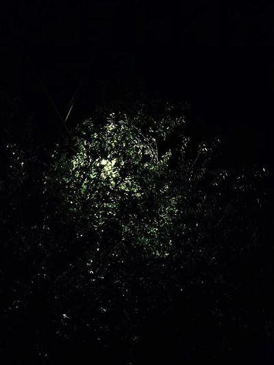 Tree Night Dark