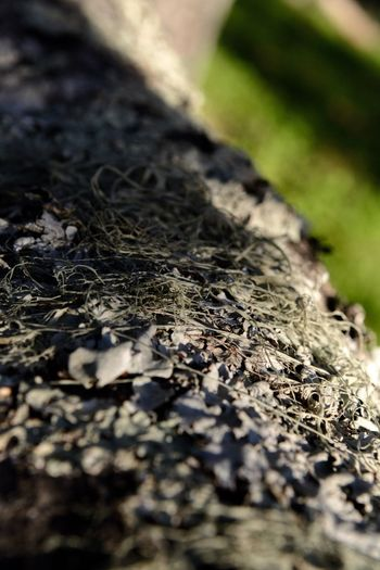 Tree Bark Lichen Moss Selective Focus No People Close-up Nature Day Textured  Sunlight Plant Outdoors Green Color Plant Part