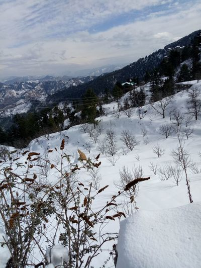 White Snow Hill Travel Destinations Snowcapped Mountain Hillside Snow Relaxed Moments Outdoors No People Morning Hill ❄ Shimla Hill Station White Snow Covered Trees Snowfall Shimla, Nature Snow White ShimlaDiaries Snow ❄ Snow Covered Snowfall Shimla Snowing Morning Snow Architecture Environment Casual Clothing Real People Two People Portable Information Device Wood - Material Food And Drink Growth Elementary Age Beauty In Nature Scenics