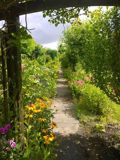 Urban Nature Silence Of Nature Heckenschere Heckenschütze Stellingen Gardening Planting