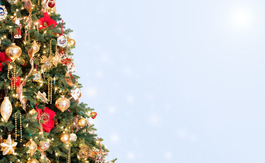 Close-Up Of Christmas Tree Against Colored Background