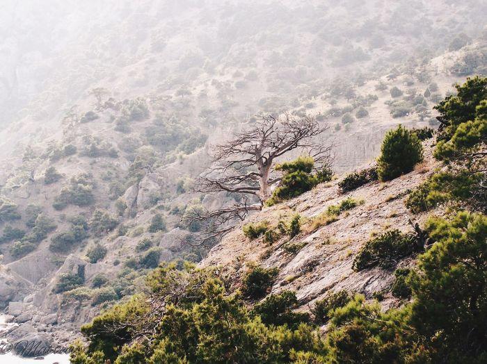 Крым , Новый Свет . Vscophile Relaxing Nature Crimea Morning Dew National Geographic