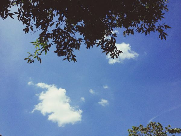 Clouds on the sky and have leave Tree Low Angle View Blue Nature Sky Beauty In Nature Day Growth No People Outdoors Branch Blue Sky