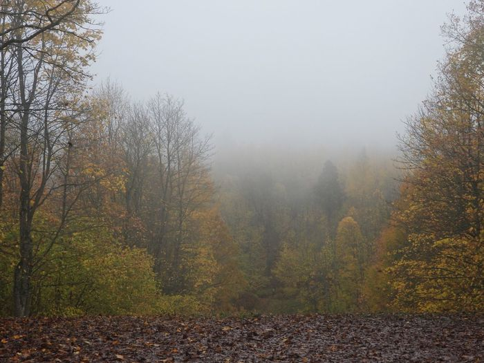 Trees and plants in forest during autumn