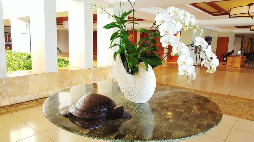 Hawaii The Big Island The Marriott Travel Traveling Interior Turtle