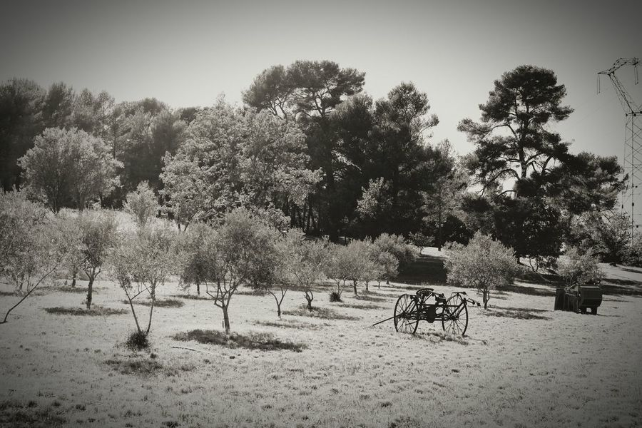 Tree Nature Day Outdoors No People Tranquility Beauty In Nature Beauty In Nature Tractors Paysan Agriculture Tracteur Olive Olive Tree Branch Olivier Plant Olives Arbres Nature Vantarelle Wood - Material Charette Paille Foin