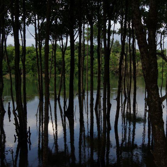 Mangrove Nature