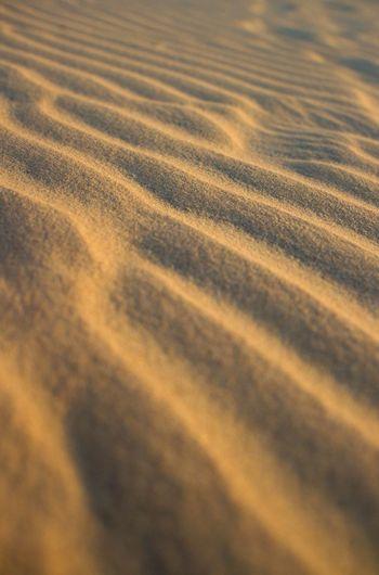Sand Desert Lines In Sand Selective Focus Sand Only Pattern Golden Sand