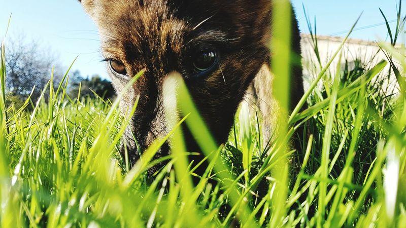 Pets Portrait Rural Scene Looking At Camera Feline Sky Close-up Grass Green Color Animal Eye Animal Head  Animal Nose Animal Face
