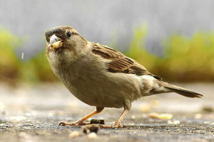 Nature's Diversities bird