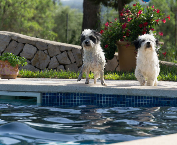 Dogs Fun PoolPartyy! Summertime Animal Themes Black And White Dog Day Outdoors Pets Snoozers Swimming Pool Water