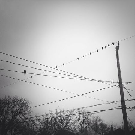 Flock Of Birds Bird Large Group Of Animals Flying Animals In The Wild Cable Animal Wildlife Animal Themes Silhouette Sky Telephone Line Power Line  Togetherness Outdoors Electricity  Low Angle View No People Day Nature