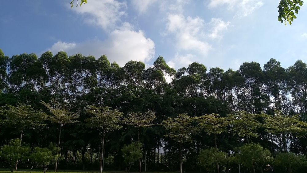 It's a green green green world! Edenmandom Hanging Out Morning Jogging Waterfront Tree Sky Green Color Forest Tree Area