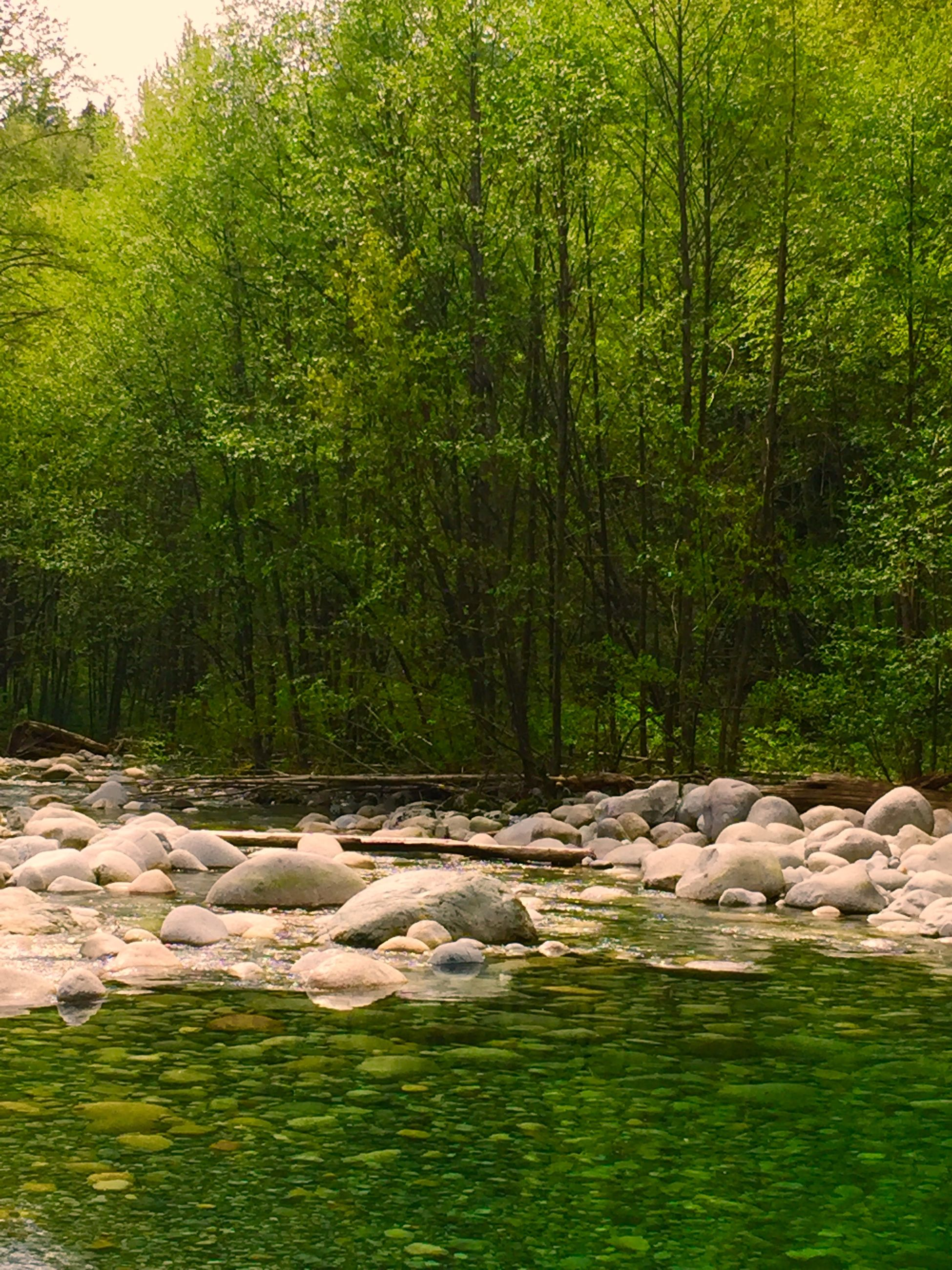 water, tree, tranquility, nature, tranquil scene, beauty in nature, scenics, rock - object, green color, growth, stream, grass, forest, river, plant, day, idyllic, rock, outdoors, non-urban scene