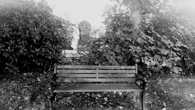 Bench Lonely Trees Cemetery Cemeteryscape Oldham Hollinwood
