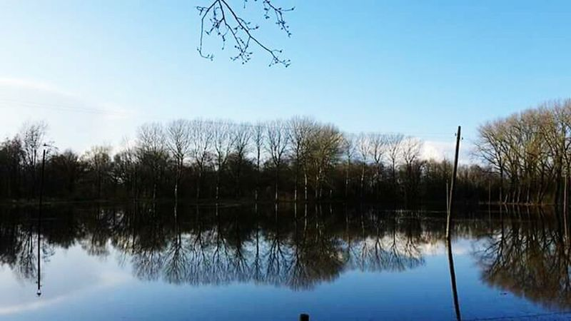 Tree Water Reflection Nature Outdoors Sky No People Beauty In Nature Helmond