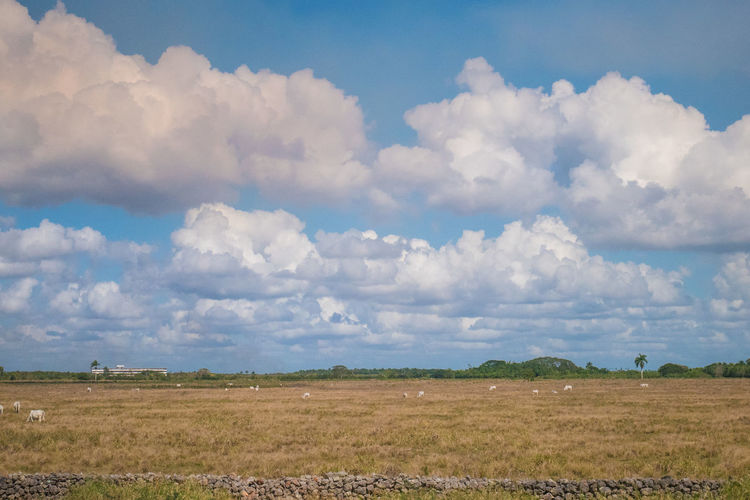 Cuba Agriculture Beauty In Nature Carribean Cloud - Sky Day Field Landscape Nature No People Outdoors Rural Scene Scenics Sky Tranquility