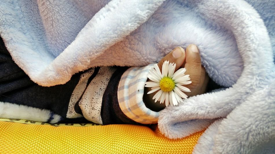 Flower Close-up Fragility Freshness Flower Head Nature Beauty In Nature Outdoors Baby Hand Flower In Hand Daisy Fleur Bebek