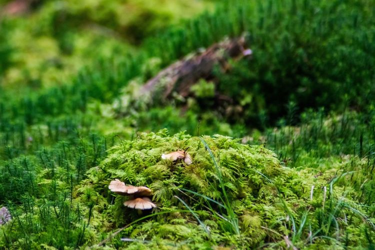 Growth Nature Grass Mushroom Field Green Color No People Fungus Toadstool Moss Outdoors Plant Day Beauty In Nature Close-up Fly Agaric Freshness Mould Fungus Mushroom Fungi Forest Woodland Scene