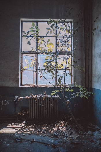 Window In Abandoned Room