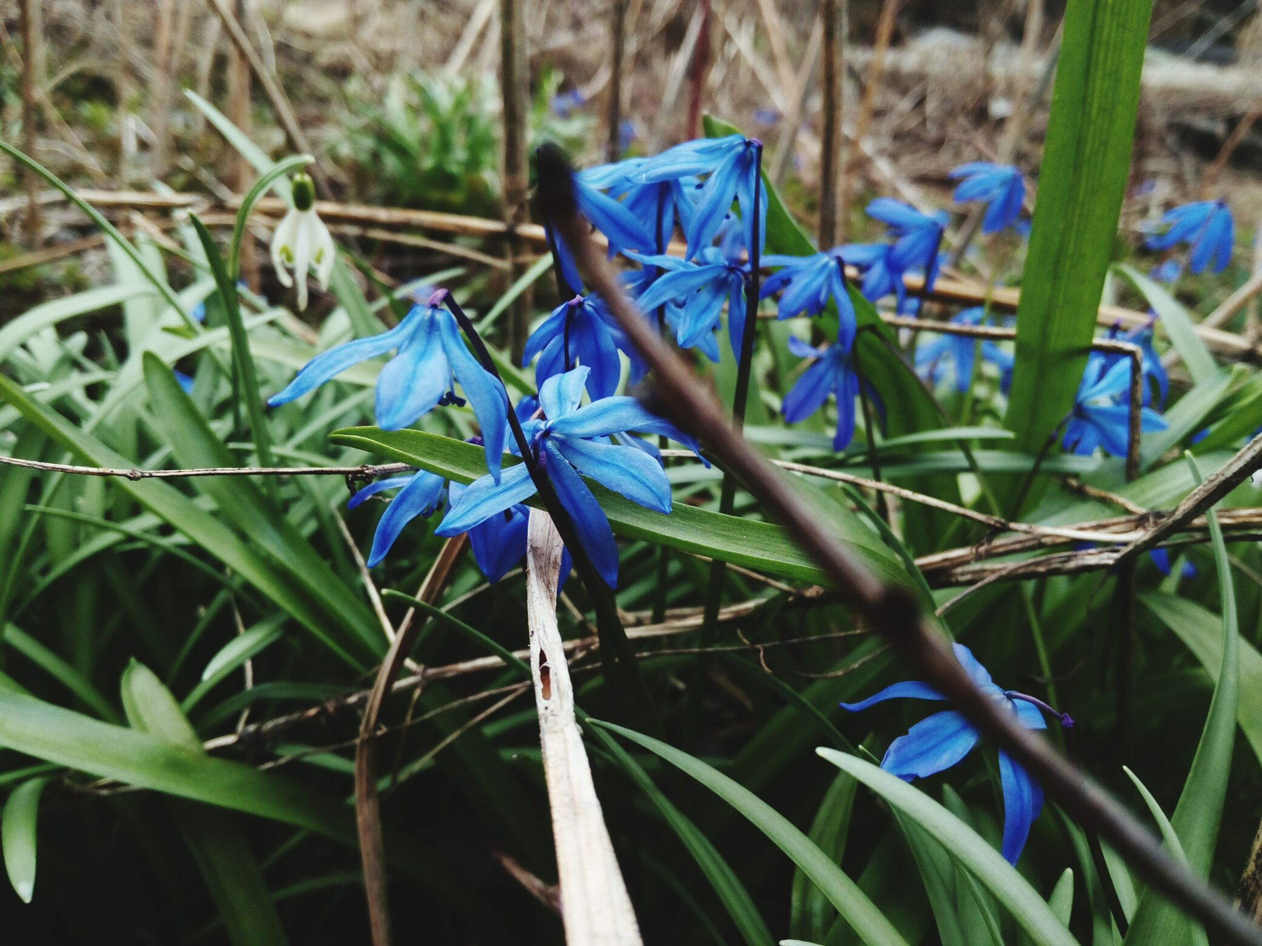 blue, nature, purple, fragility, outdoors, plant, growth, beauty in nature, no people, close-up, day, animal themes