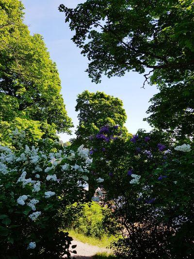 Tree Branch Sky Green Color Growing Blooming