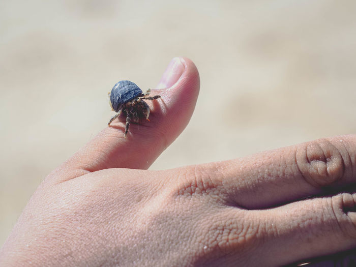 Cropped hand of person holding crab at beach during sunny day