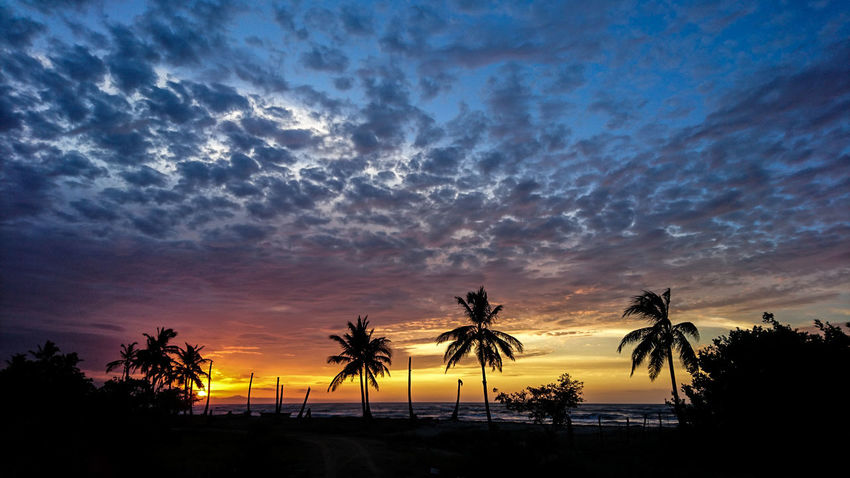 Amazing View Peace Sunset_collection Tranquility Wanderlust Amazing Beauty In Nature Carribean Cloud - Sky Go Higher Nature No People Outdoors Palm Tree Scenics - Nature Silhouette Sky Sunset Tranquil Scene Tranquility Tropical Climate